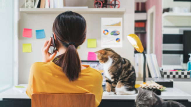 a woman sitting at a desk with a cat
