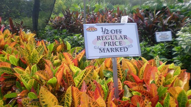 a sign on an orange flower