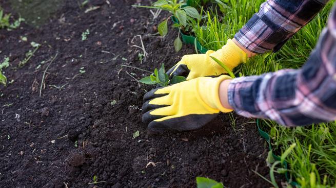 Garden activity with gloves